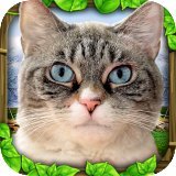 Download Today | Stray Cat Simulator